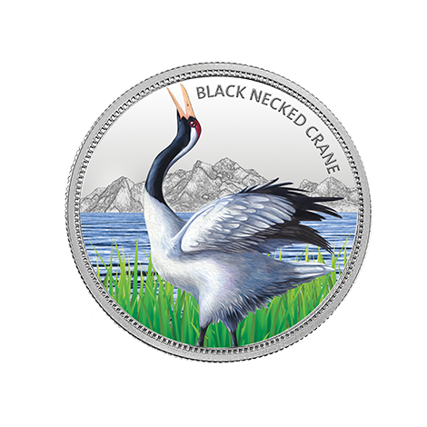 https://mmtcpamp.com/sites/default/files/Black-neckedCrane_13.png