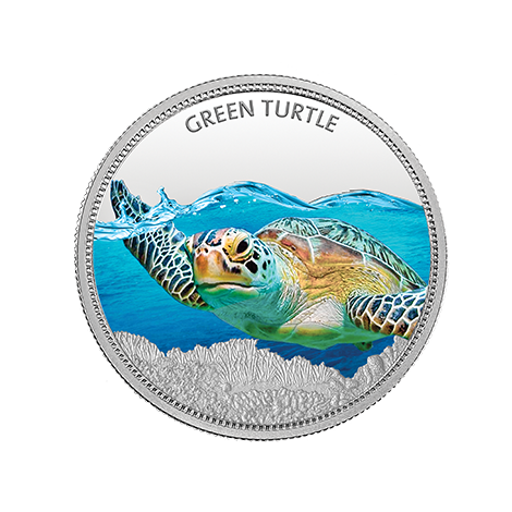 https://mmtcpamp.com/sites/default/files/GreenTurtle_11.png